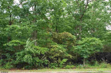 3477 Cedarville Rd, Cedarville, New Jersey 08311, ,1+ To 5 Acres,For Sale,Cedarville Rd,13996